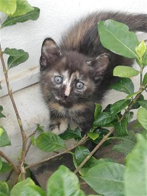 Kittens looking for loving owners