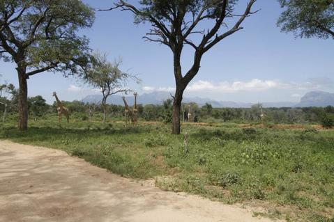 Vacant Land Residential For Sale in Leadwood Wildlife Estate