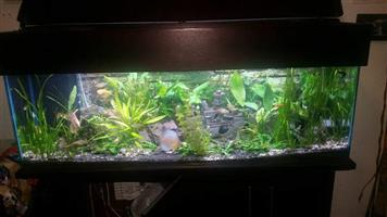 Fish tank with sump for sale