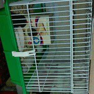 Item still look for second hand mice cage