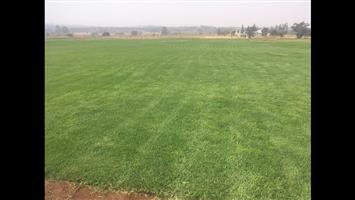 Fresh instant lawn Kikuyu and Lm + free delivery. We also lay grass