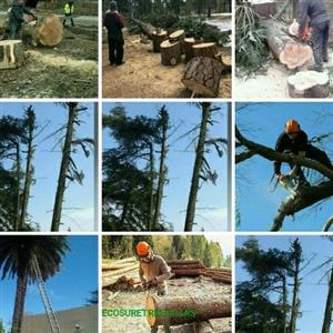 tree felling Pretoria East
