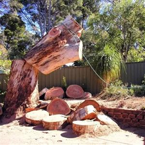 Budget Tree Fellers | tree cutting and felling services.