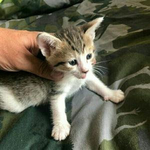 4 Gorgeous kittens need homes