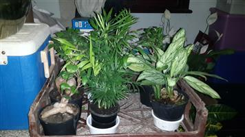 Indoor Plants central PMB