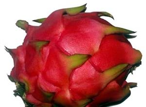 Costa Rica Red flesh Dragon Fruit cuttings for sale