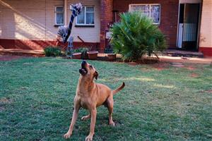 Dog Trainer and Walker