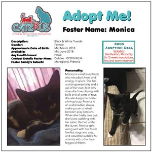 Monica - your new BFF. Come and meet our CatzRus rescue kittens. R800 incl essential vet care.