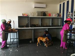 Umhlanga dog & cat grooming parlours
