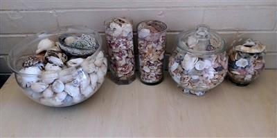 Lots of seashells. R500 for the lot. Can also be used in aquariums.
