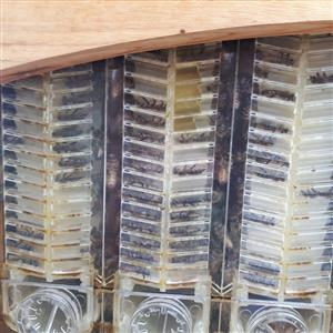 Flowing honey Flow hives (generic version)