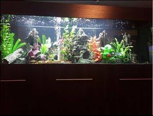 Tropical Aquarium for sale
