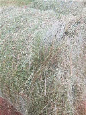 A graad 1,2m oulandsgras