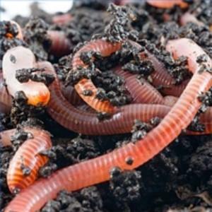 Worm Farming Suppliers