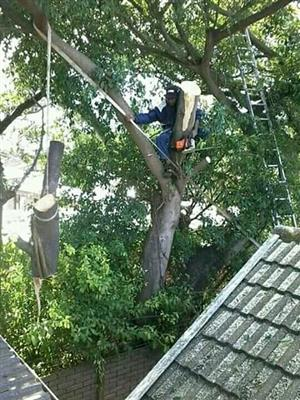 AFFORDABLE TREE FELLING SERVICES AND STUMP REMOVAL