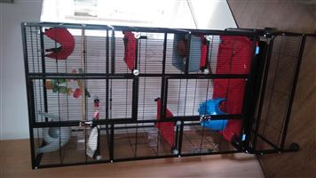 Two rats and a cage for sale.