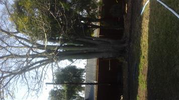Tree silk floss