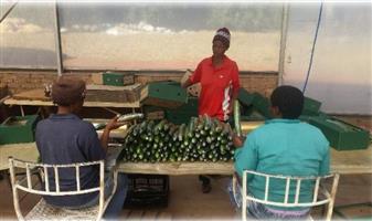 Cucumber farm for sale
