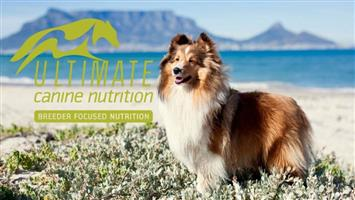 Ultimate Canine Nutrition Wheat and Maize free ( Gluten Free) dog food available at PETS4LIFE BRACKENFELL