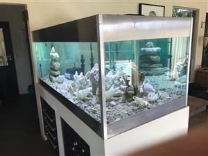 Aquarium Marine Large