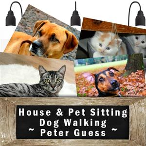 House Sitter, Pet Sitter and Dog Walker: Southern Suburbs