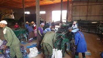 Washing,sorting,packing line