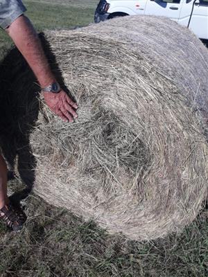 Eragrostis bales in Standerton area