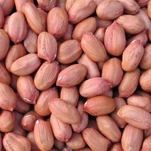 Peanuts - Jumbo @ R850 for 50kg
