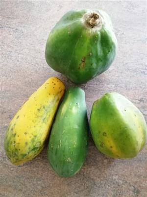 Papaya R10/kg