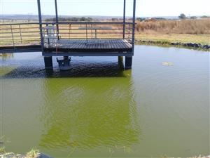 Tilapia to start fish farm