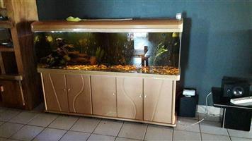 500litre Fish tank R5000 neg