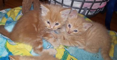 Cute kittens x 6