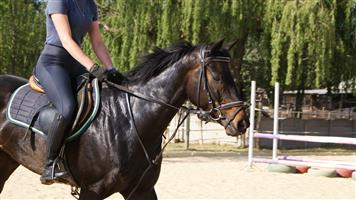 THOROUGHBREDS FOR SALE