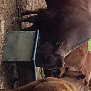 Animal feeders and water troughs