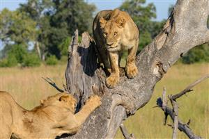 Black Friday Tour to the Kruger