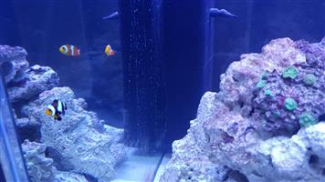 Saltwater Aquarium marine tank For Sale