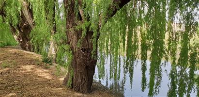 agricultural zoned for Recreation . Relax Listen to the sound of Nature in the shadow of willows on the natural riverbank .catch a fish !