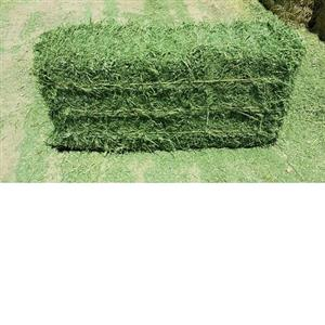 Timothy Hay and Lucerne Hay for Sale