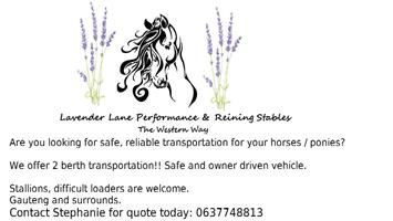 Transportation of horses and ponies