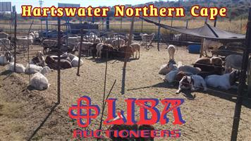 We have livestock for sale on our auctions on a weekly basis.