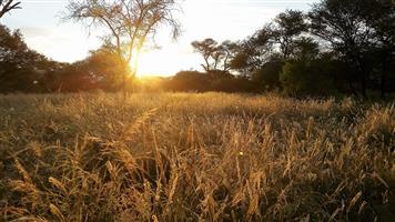 82 Ha Limpopo Rivierfront Plaas naby Stockpoort, Ellisras