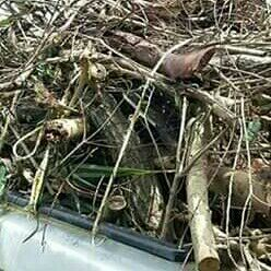 C.M GARDEN SERVICE AND TREE FELLING