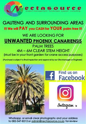 Need extra cash - Sell us your unwanted Phoenix canariensis