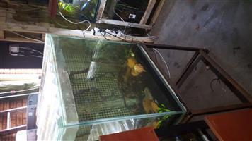 2 Foot Cube Aquarium and Stand