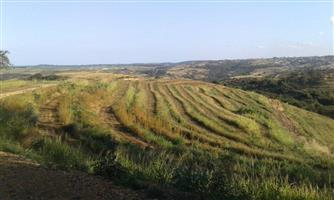 84HA FARM with 15HA Macadamias - SOUTH COAST - R 8 800 000