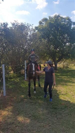 Horse Riding Lessons from beginner to advanced