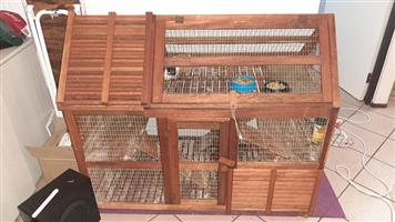 2 x Guinea Pigs for Sale