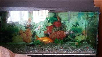 110L Fish tank for sale