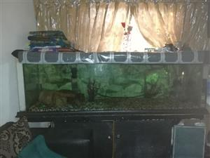 6 foot fish tank with cabinet