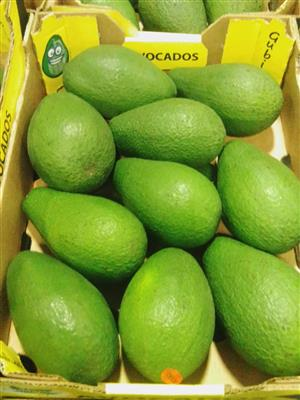 Ripe and Ready Avocados